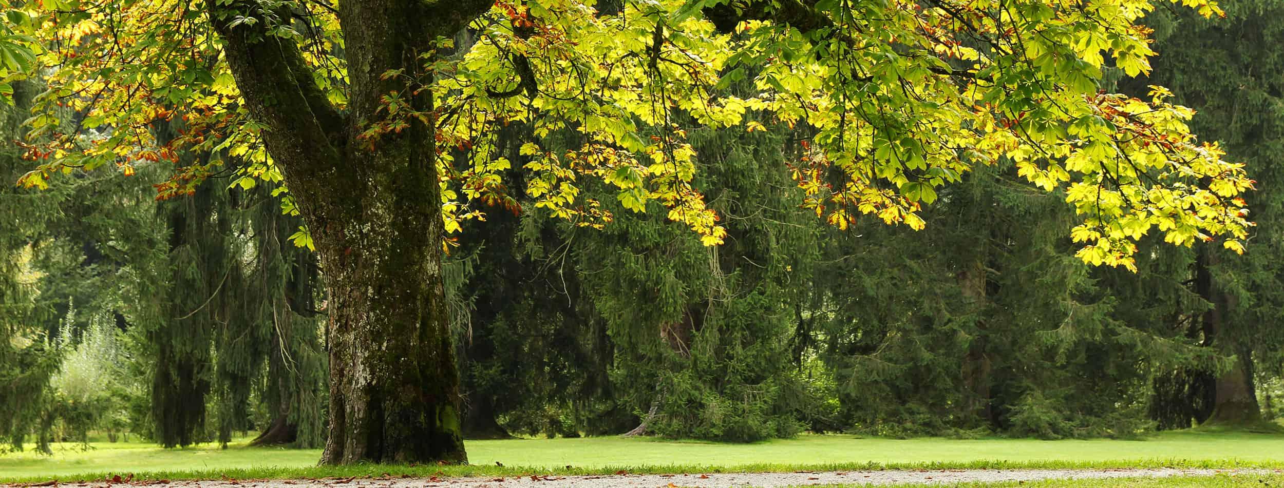 Baum pflegen Altbestand